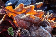 Leaves with Hoarfrost | UU-Fotografie – Ulrike Unterbruner