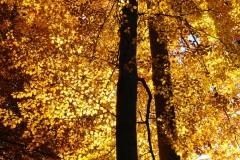 Autumn Flames   UU-Fotografie – Ulrike Unterbruner