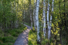 Birch Trees In Morning Light | UU-Fotografie – Ulrike Unterbruner