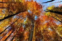 Colourful Autumn   UU-Fotografie – Ulrike Unterbruner