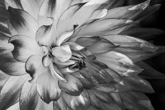Dynamic Beauty | UU-Fotografie – Ulrike Unterbruner