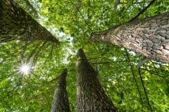 leaf-canopy-ulrike-unterbruner