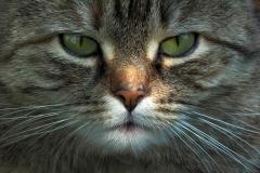 My Cat | UU-Fotografie – Ulrike Unterbruner