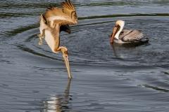 Pelican Diving | UU-Fotografie – Ulrike Unterbruner