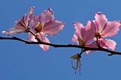 Pink Blossoms on Tree | UU-Fotografie – Ulrike Unterbruner