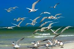 Terns In Morning | UU-Fotografie – Ulrike Unterbruner