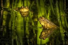 Toads in Garden Pond | UU-Fotografie – Ulrike Unterbruner