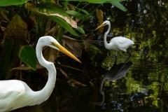 white-herons-ulrike-unterbruner