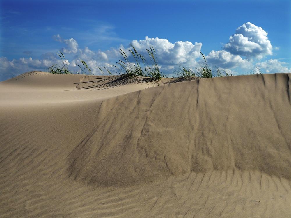 Danish Dunes | UU-Fotografie – Ulrike Unterbruner
