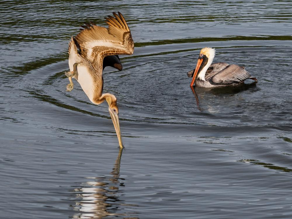 Pelican Diving   UU-Fotografie – Ulrike Unterbruner
