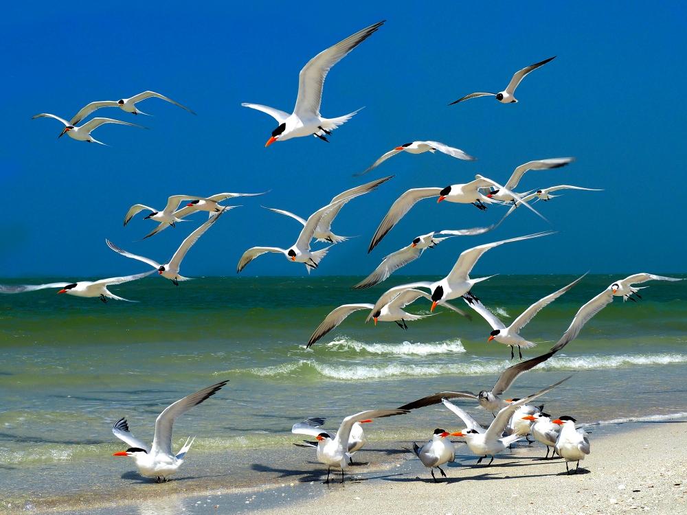 Terns In Morning   UU-Fotografie – Ulrike Unterbruner