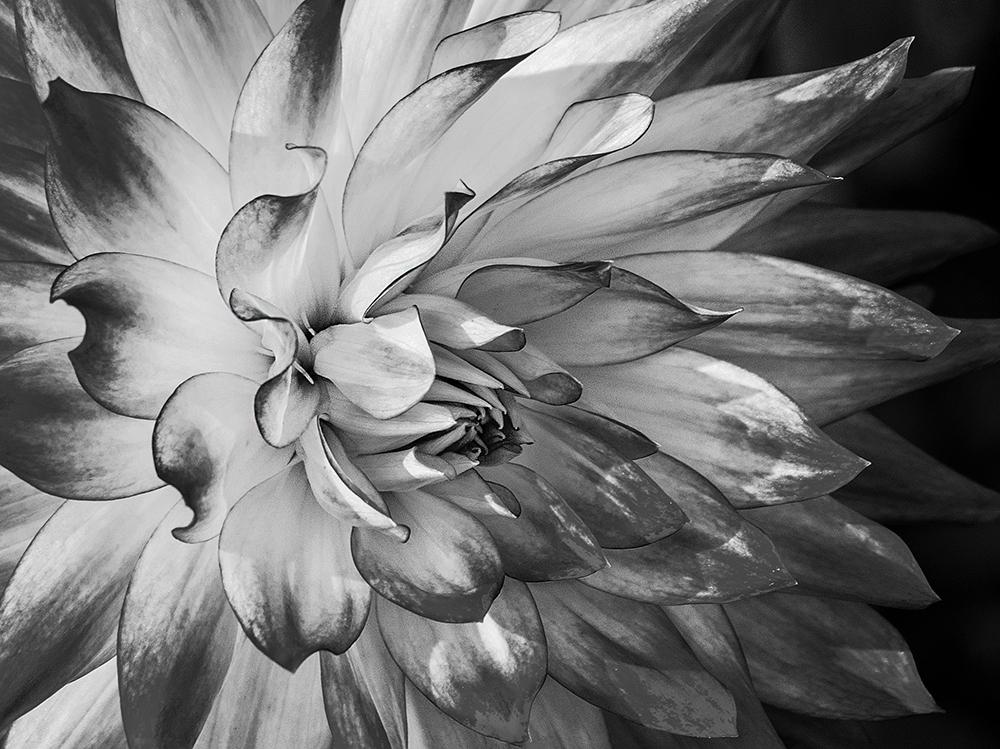 Dynamic Beauty   UU-Fotografie – Ulrike Unterbruner
