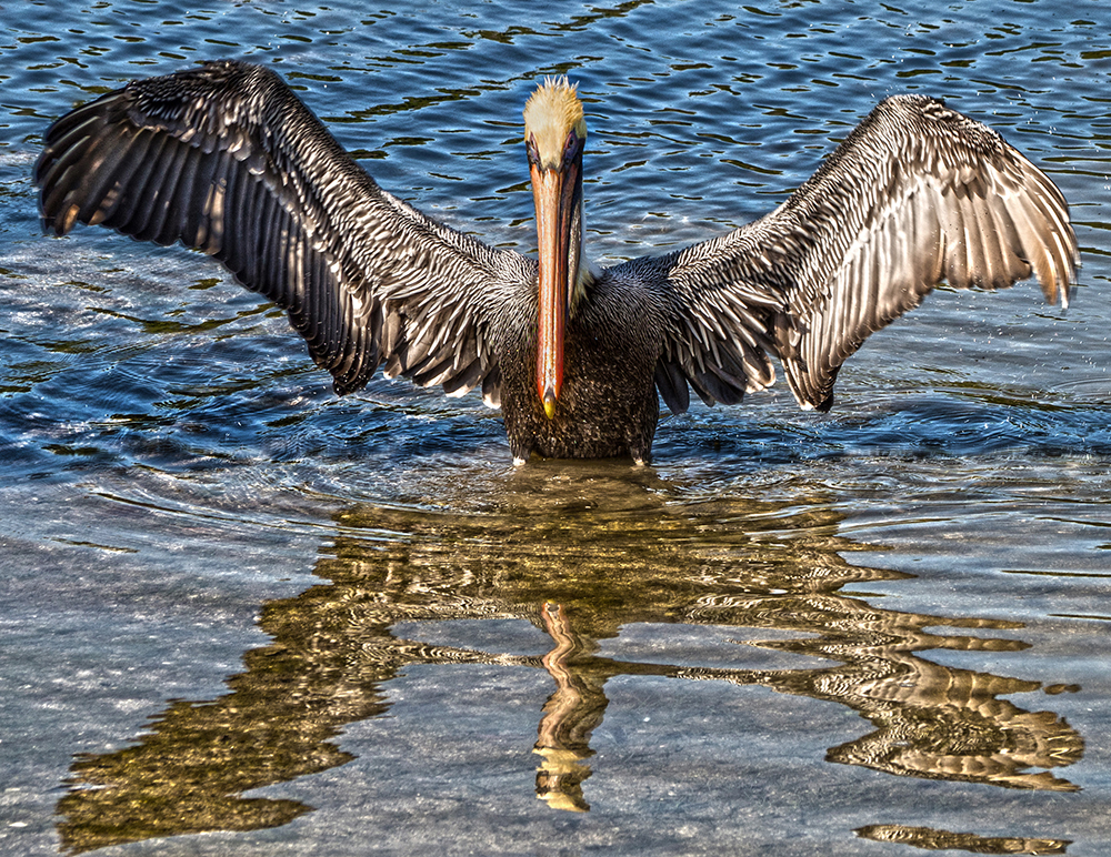 Majestic Pelican | UU-Fotografie – Ulrike Unterbruner