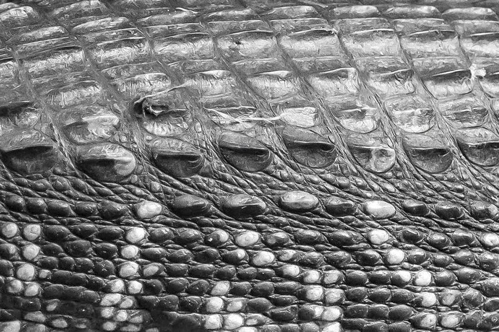 Gators   UU-Fotografie – Ulrike Unterbruner